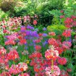 Furzey Gardens- New Forest