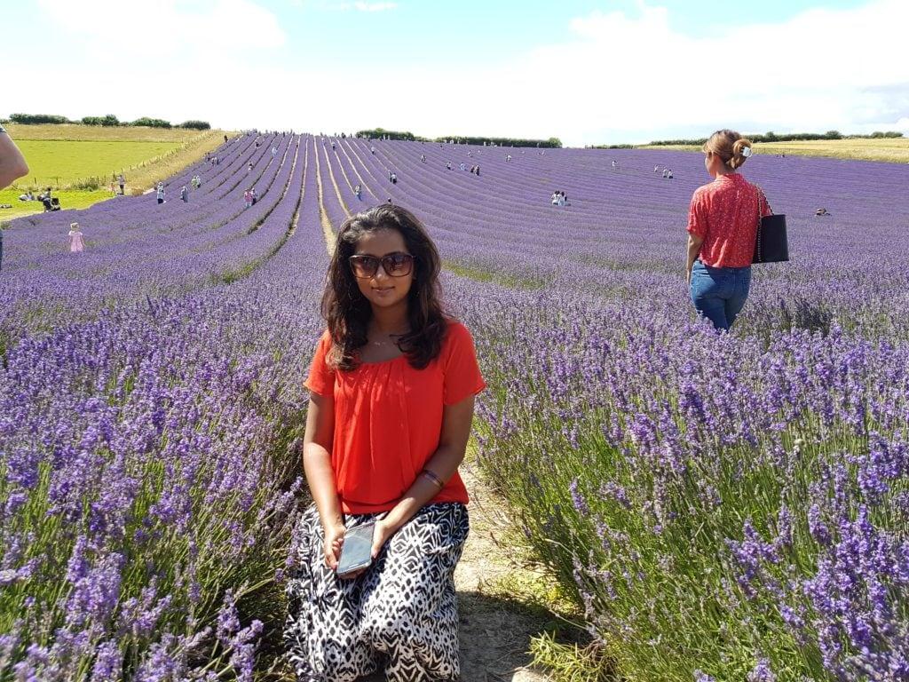 Lordington lavender garden