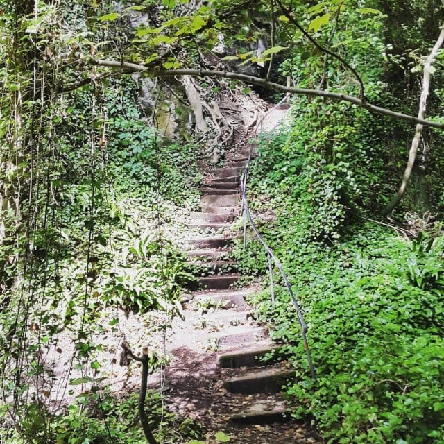 Steps to serenity isleofwight bonchurchlandslip serenity gettinglost woodlandwalks wornshoes findingfairyshellip
