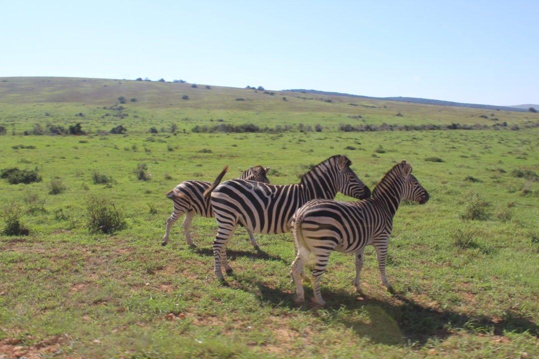 Addo Park Port Elizabeth