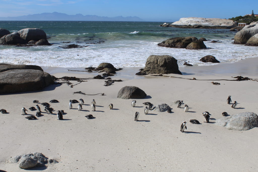 Boulders Beach-Cape Point Tour